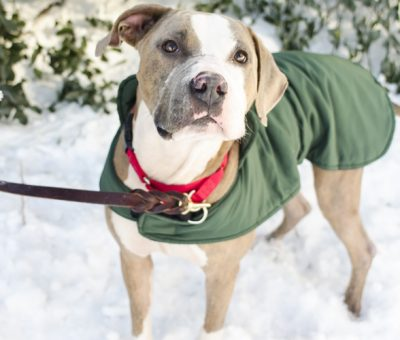 Caring for your pet during the cooler months